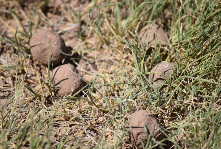 Bombas de Semillas en El Morro (San Luis)