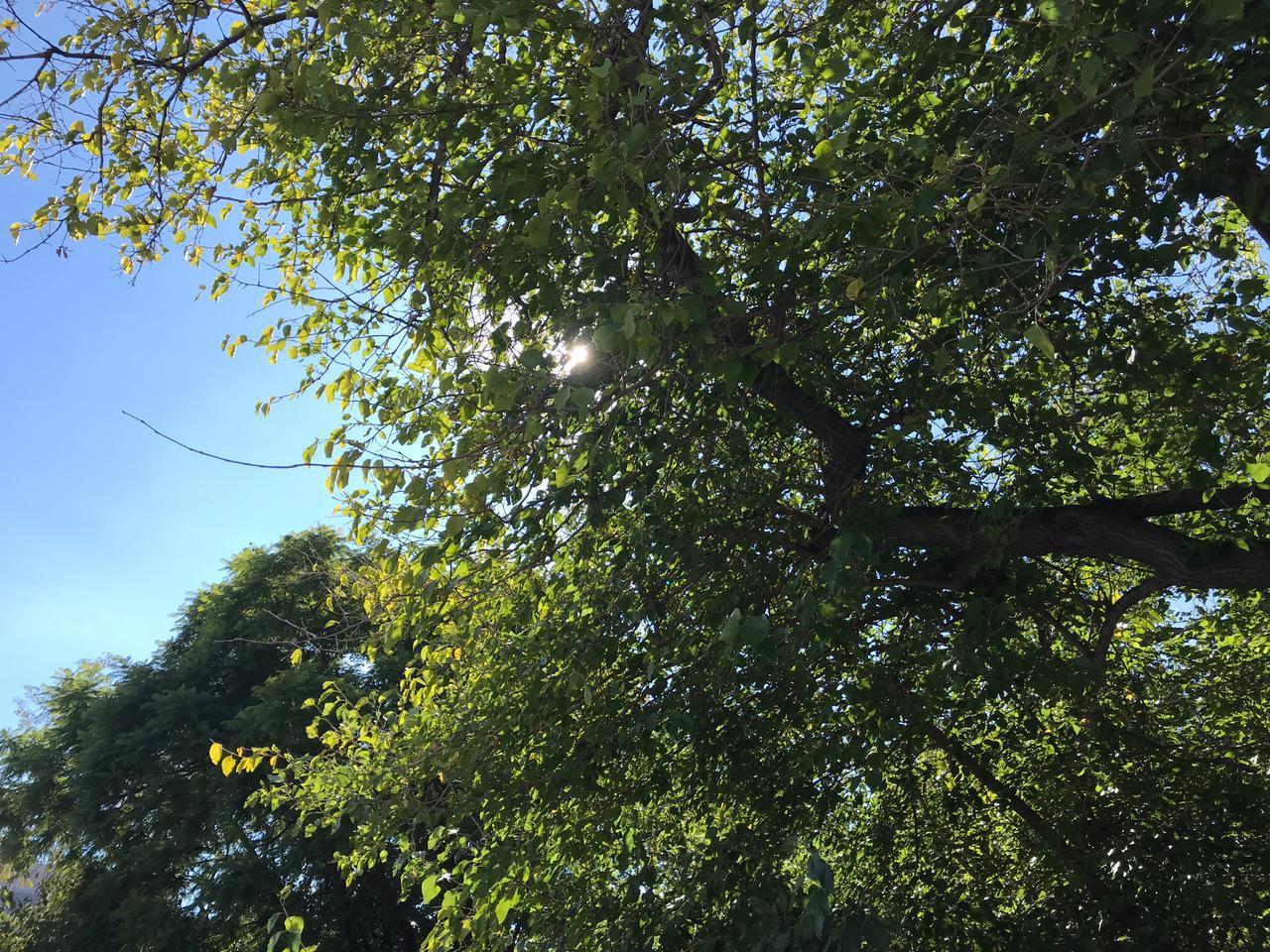 cielo despejado y soleado
