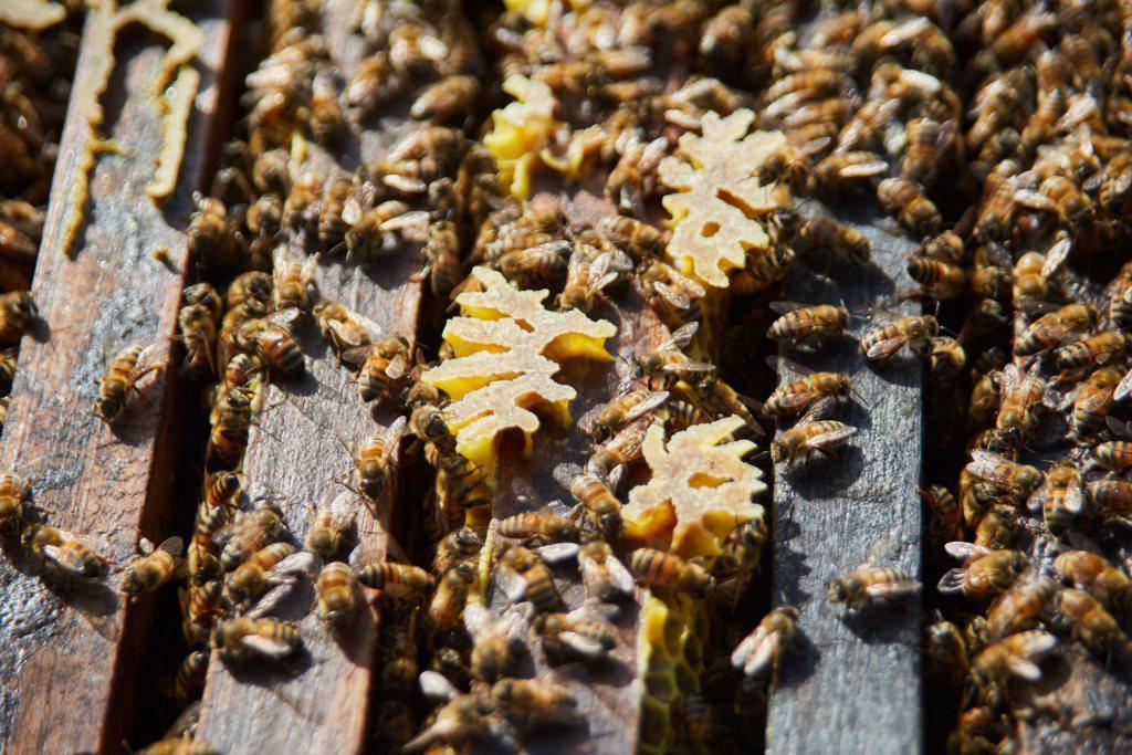 Las Heras, abejas, semana de la miel